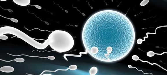 troubles de la fertilité masuline